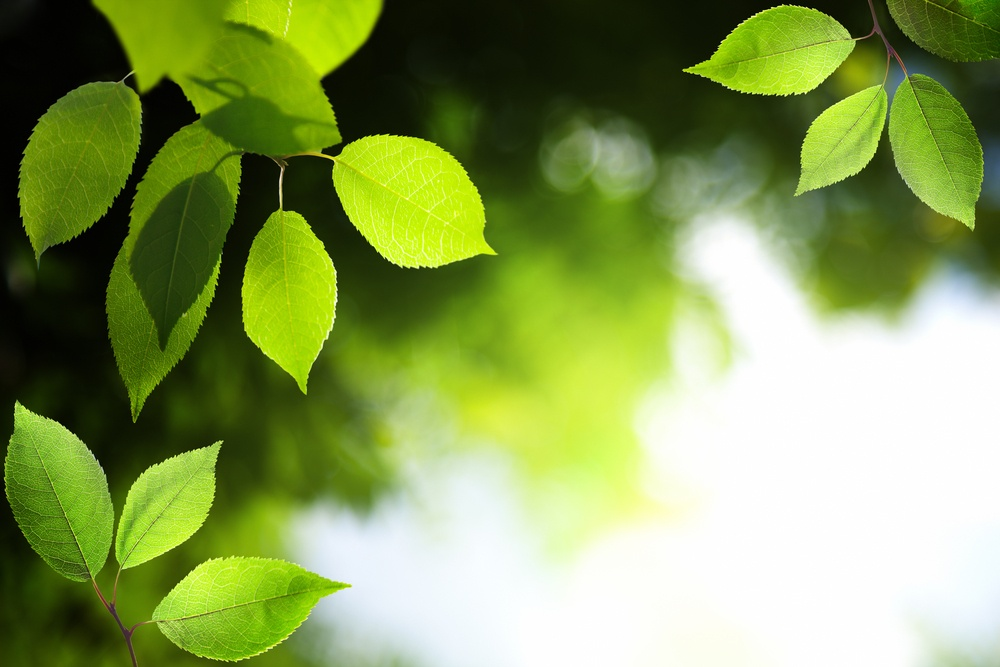 leaves in deep forest.jpeg